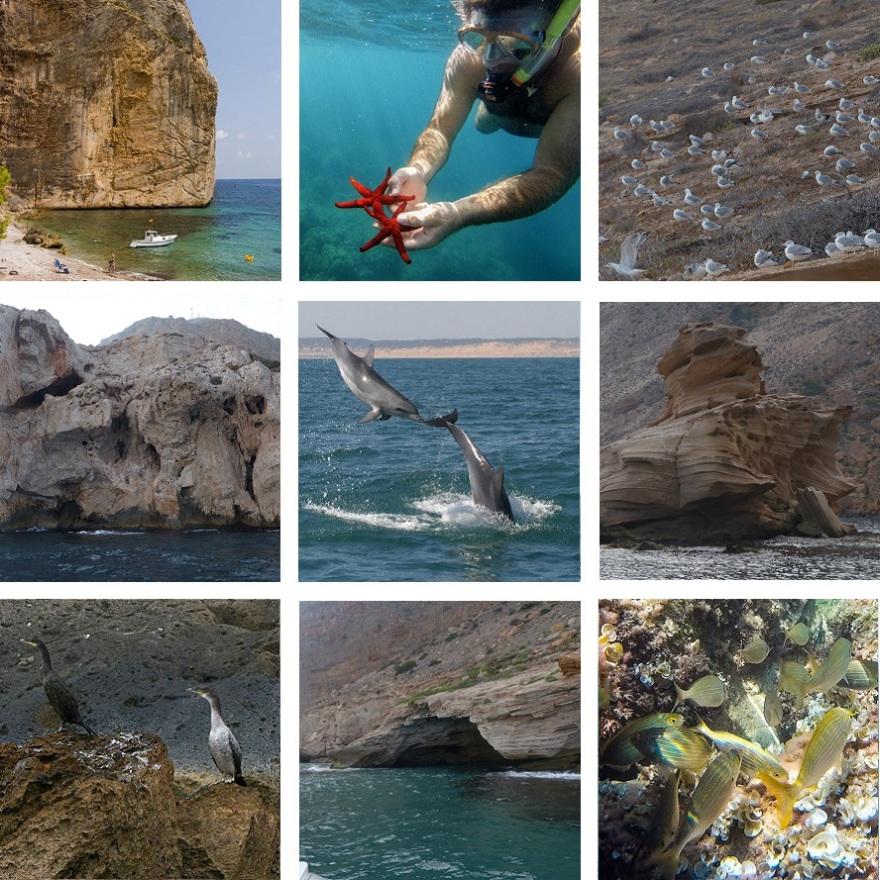 Playa de Benidorm, delfines al Altea, Cormoranes en Calpe, Acantilados en Albir