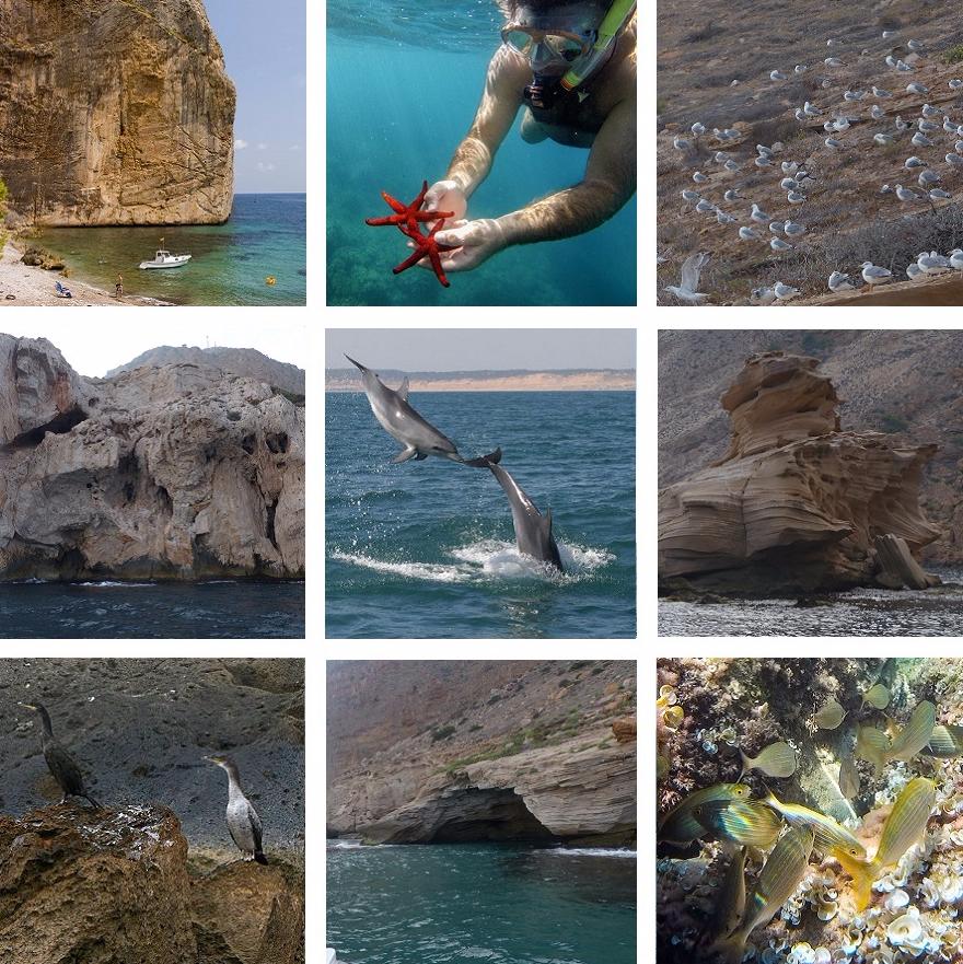 Acantilados de Toix, estrellas de mar, salpas, gaviotas, delfines, naturaleza viva en Campomanes