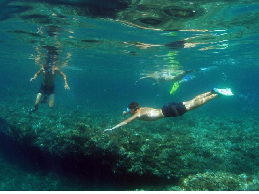 Fondo del mar rocoso en Benidorm, snorkel en Benidorm